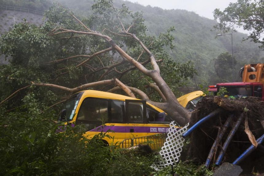 A school bus is struck by a fallen tree during Typhoon Mangkhut in Hong Kong on Sept 16, 2018.