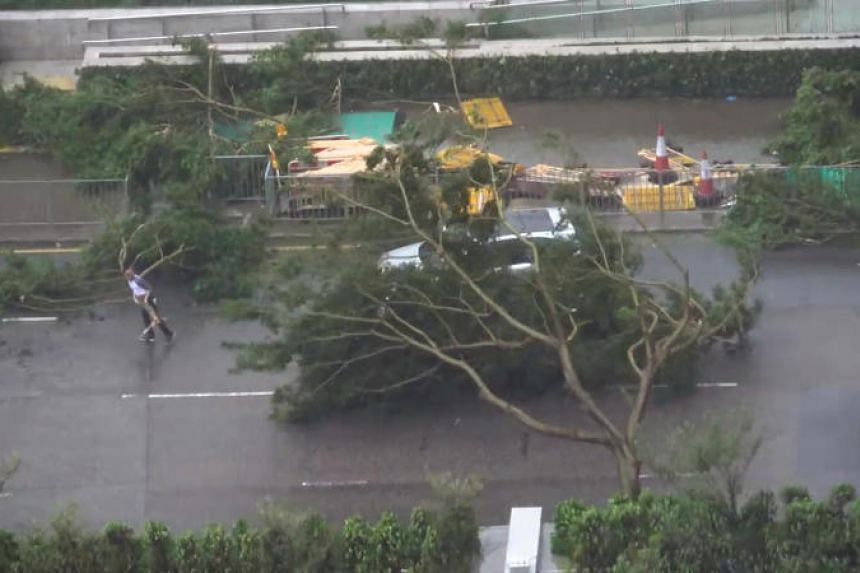 A driver removes a fallen tree during Typhoon Mangkhut in Hong Kong, on Sept 16, 2018.