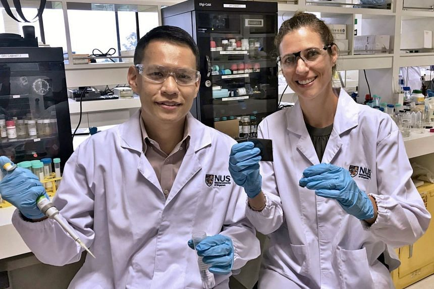 Associate Professors Ho Han Kiat (left) and Giorgia Pastorin from NUS were the lead researchers behind the hydrogel structure for the liver-like cells.