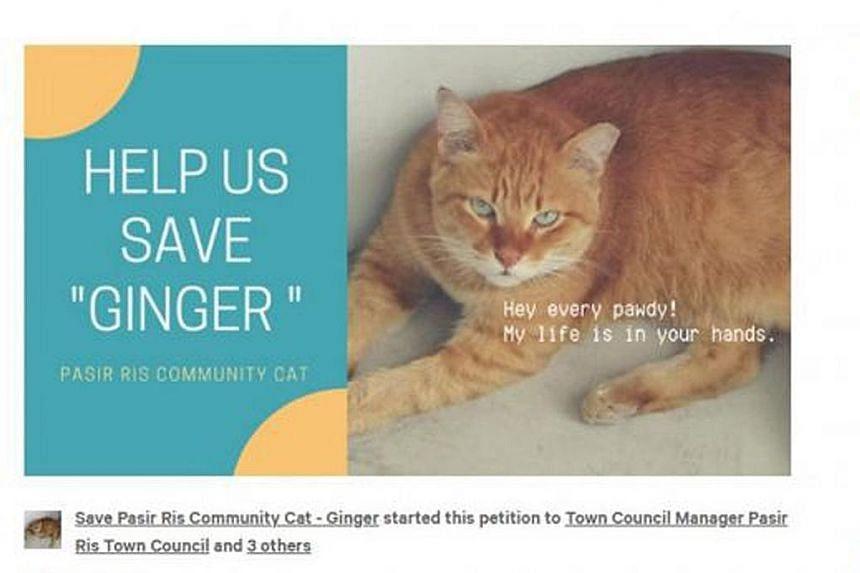 The petition has received over 19,000 signatures so far. The town council has said there was never any plan to remove the cat.