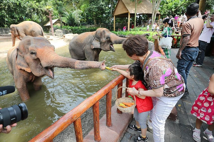 Visitors feeding elephants after a show at the Singapore Zoo on Sept 13. The Asian elephants will no longer do stunts at the twice-daily presentations that play out to crowds of hundreds. Instead, they will interact with enrichment toys, with keepers