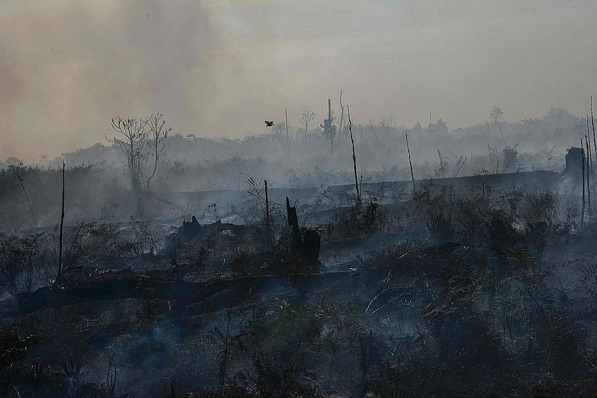 """A picture taken in July last year showing the aftermath of a forest fire in Meulaboh, Aceh. The slash-and-burn method of clearing forests has led to huge conflagrations that have contributed to premature deaths and cost billions in damage. """"That is w"""