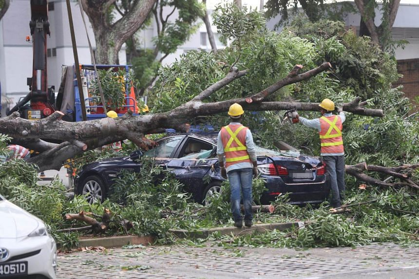 A tree fell at the Hougang carpark and damaged four vehicles, on Sept 21.