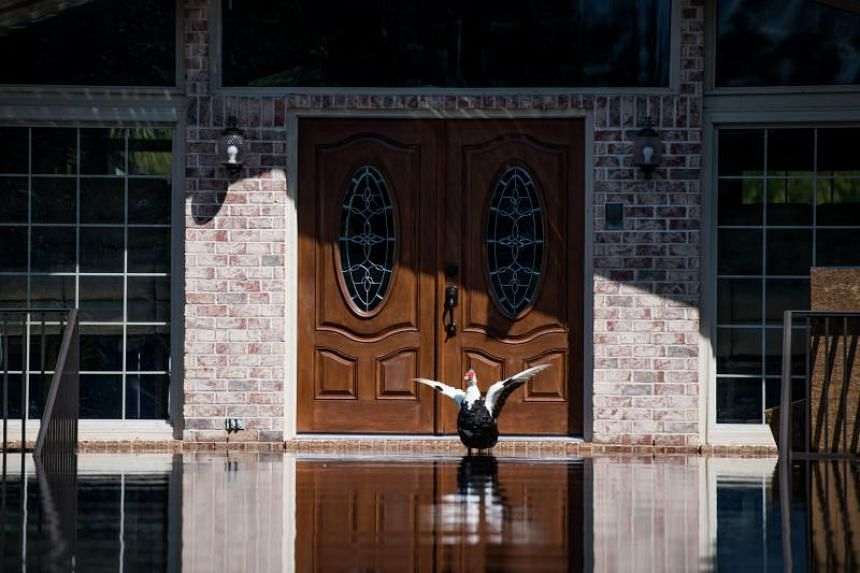 A duck flaps its wings in front of a home inundated with floodwaters caused by Hurricane Florence near the Waccamaw River on Sept 23, 2018 in Conway, South Carolina.