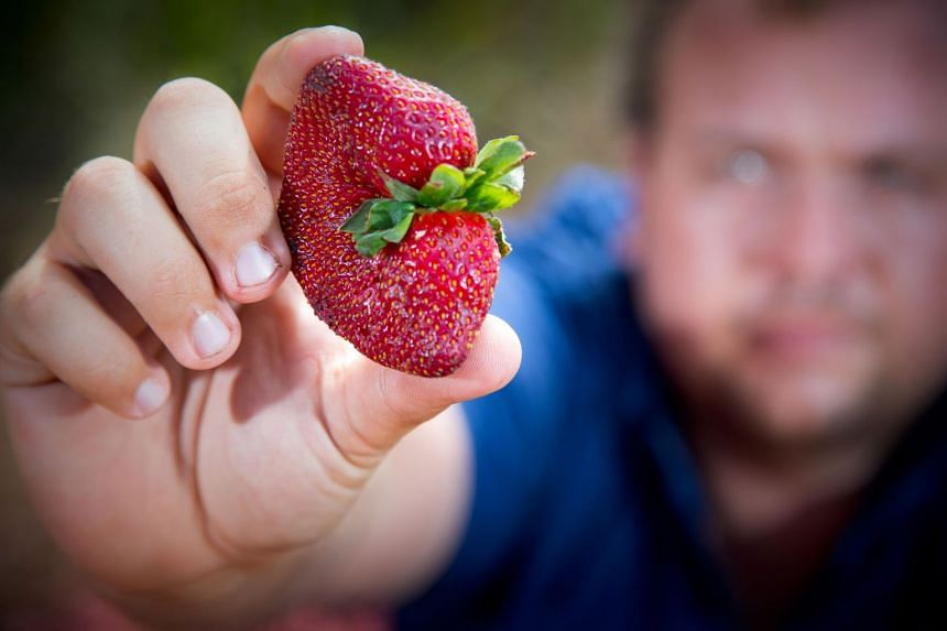 The crisis has forced growers in Australia to dump millions of strawberries and raised questions about the adequacy of food safety measures.