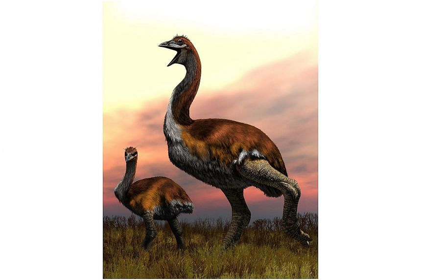 """Named Vorombe titan - Malagasy for """"big bird"""" - the creature would have stood at least 3m tall and had an average weight of 650kg, making it the largest bird genus yet uncovered."""