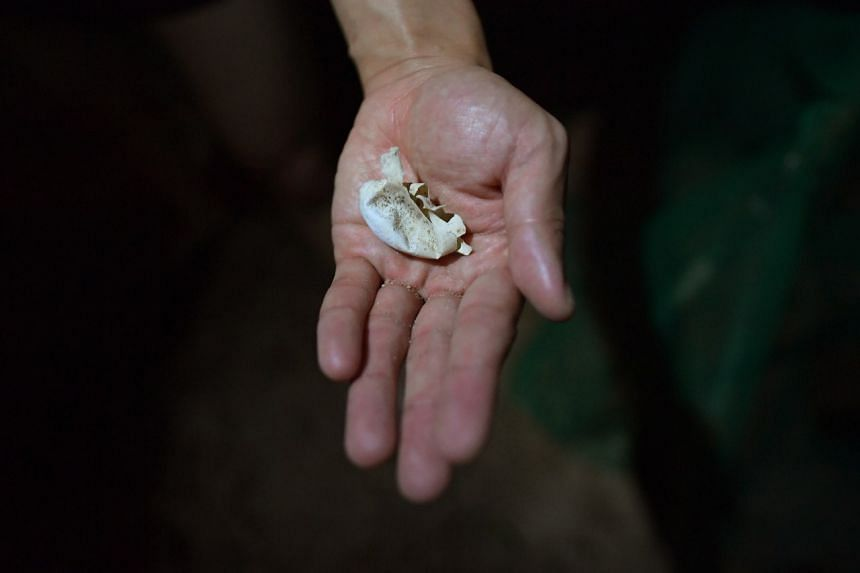 An empty turtle egg shell.