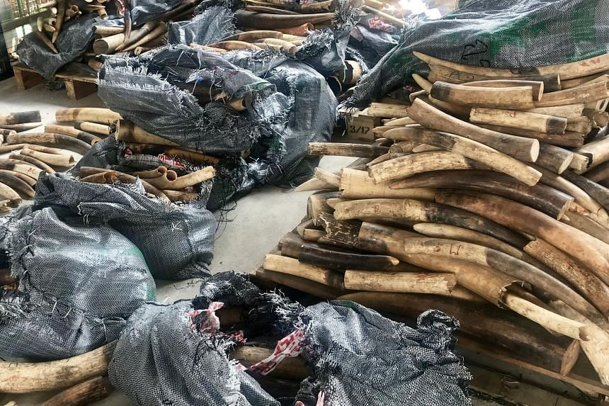 Some 3,500kg of illegal ivory was seized in Singapore in March after it was shipped from Nigeria, en route to Vietnam.