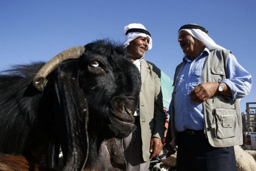 Vendors chat as they stand by a goat at a local market in Hebron on Aug 17, 2018. Researchers found happy pictures led to greater interaction from goats that looked at the images.