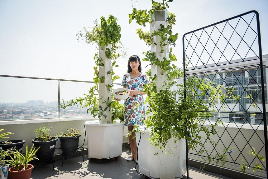 Ms Anlinna Lim has three towering vertical smart gardens growing edible plants on her balcony.