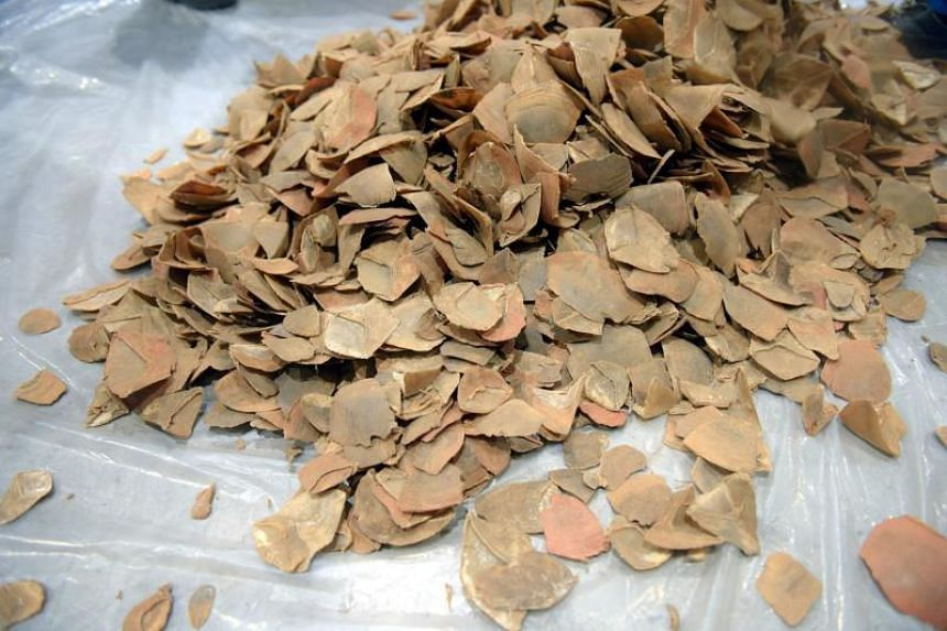 Pangolin scales seized by customs officials in Hanoi.