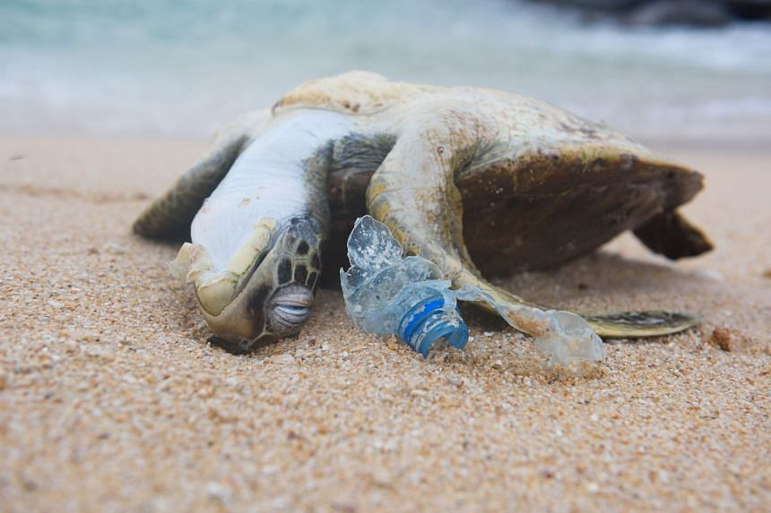 A dead turtle lies next to a discarded plastic bottle