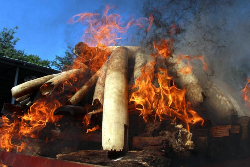 Flames rise from confiscated pieces of ivory as they are burned along with illegal wildlife parts by Myanmar's Ministry of Natural Resources and Environmental Conservation in Naypyidaw, on Oct 4, 2018.