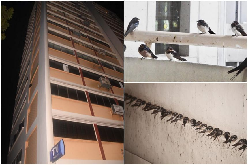 Residents say the birds are causing a mess - and a stink - with their waste