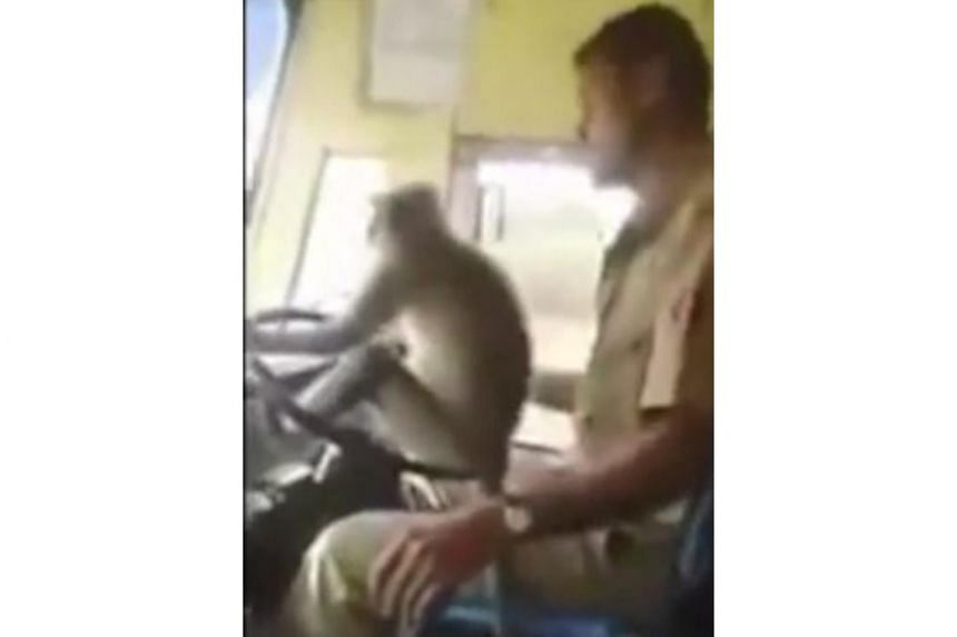 The driver is seen smiling and patting the langur monkey as it sits atop the wheel of the moving bus in footage shot by a passenger.