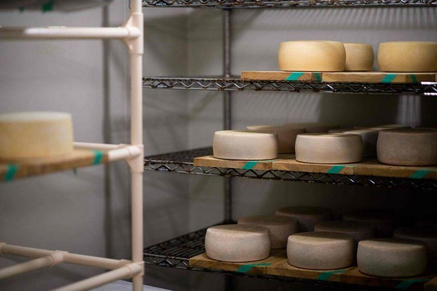 Brie cheeses at the Nasunomori cheese factory in Nasushiobara, Tochigi prefecture, on July 25, 2018.