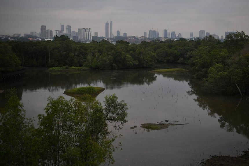 General view of Sungei Buloh Wetland Reserve. The mudflat is located about 3km to the east of reserve