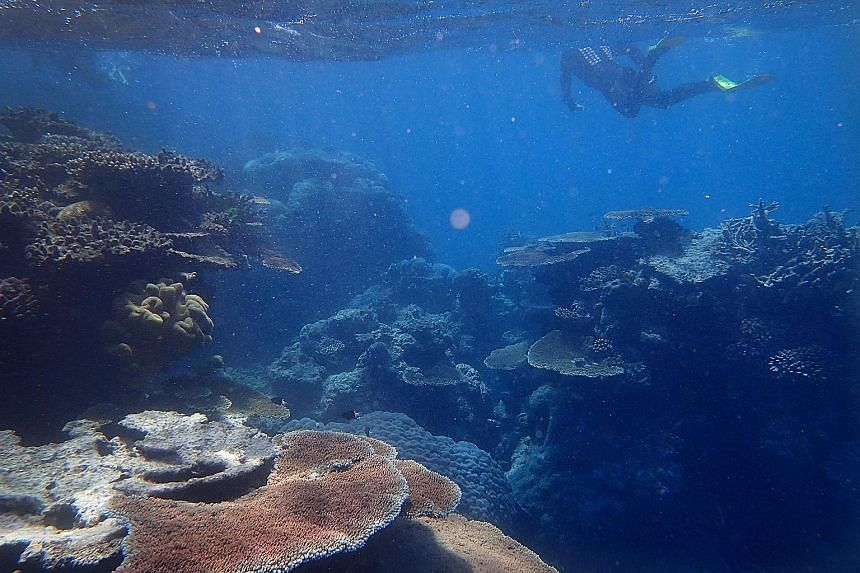 A mix of live and dead coral in one of the outer reefs near Port Douglas in Queensland, Australia. The United Nations' Intergovernmental Panel on Climate Change concluded in a major report released yesterday that deep emission cuts are needed before