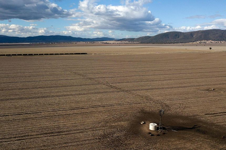 The weather outlook comes at a time when dry conditions have wilted crops and pasture in Australia's each coast, leaving many farmers struggling to survive.