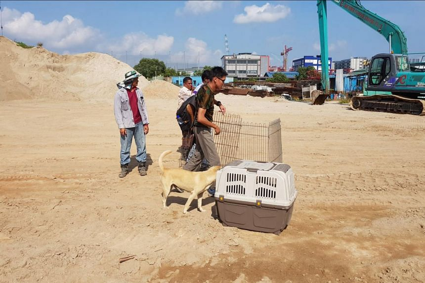 During the training programme, participants from animal welfare groups were taken to various outfield sites where trainers demonstrated how they captured strays using nets.