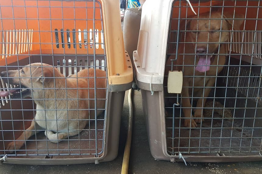 Trainers and participants captured 12 stray dogs during the training programme. These dogs will be sterilised and rehomed or released back to the areas where they were caught.