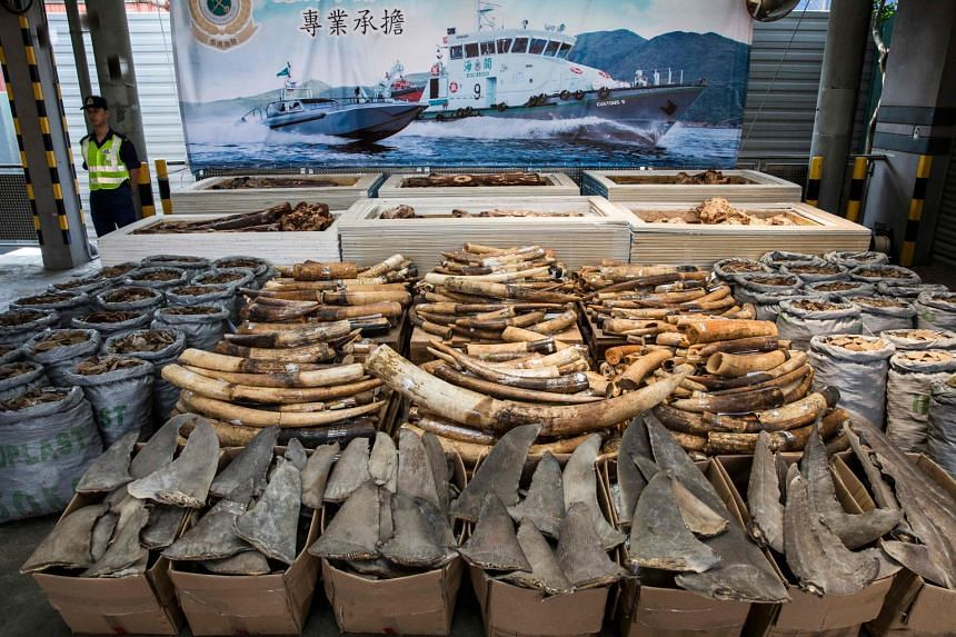 Seized endangered species products including elephant ivory tusks, pangolin scales and shark fins in Hong Kong.