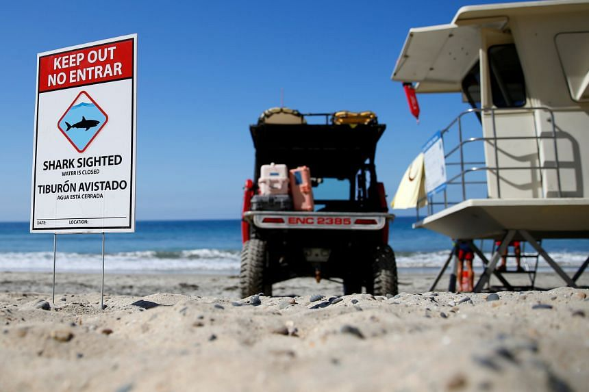 Lifeguards watch over the waters at Beacon's Beach in Encinitas in California. A boy was attacked by a shark there last month.