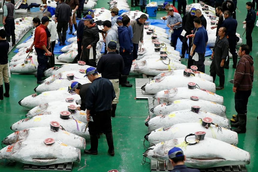 Wholesalers checks the quality of frozen tuna displayed during the first tuna auction on the opening day of the new Toyosu market in Tokyo, on Oct 11, 2018.