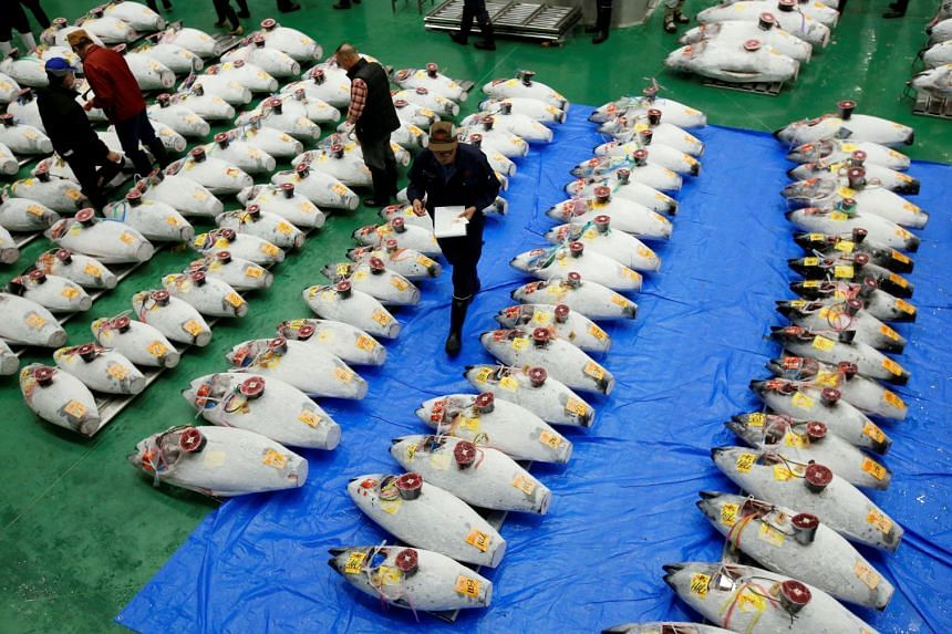 Wholesalers check the quality of frozen tuna displayed during the first tuna auction on the opening day of the new Toyosu market in Tokyo, on Oct 11, 2018.