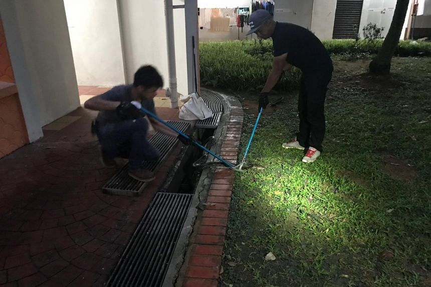 The snake, which was about 3m long, was caught in a ground floor drain by a pest control agency.