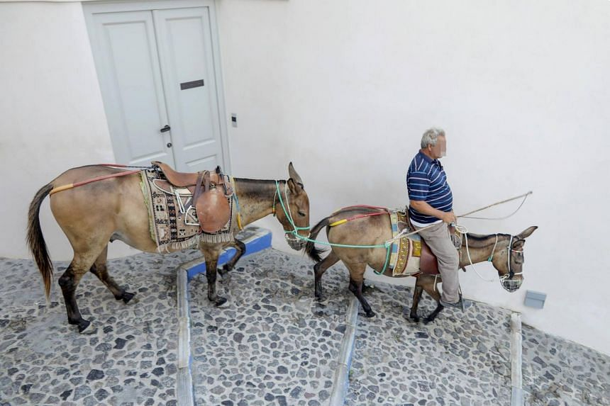 The Greek Ministry of Rural Development and Food has stated that it will be illegal for owners to burden animals with any load exceeding 100kg or one fifth of their weight.