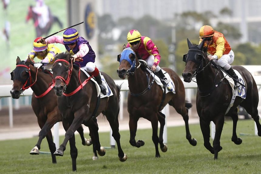 New Elegance (purple) has shown promise and should get every chance in Race 2 at Sha Tin today.