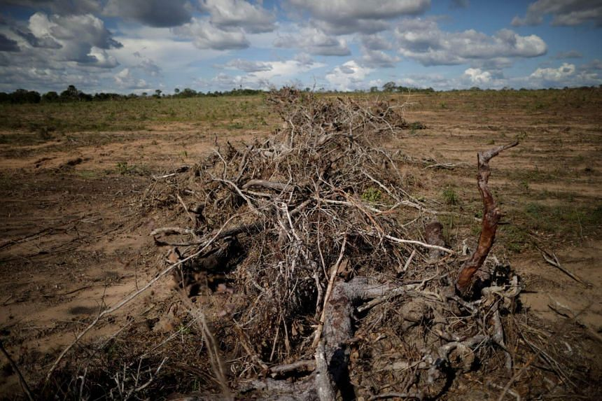 Branches and roots are piled on a farm after deforestation in Palmeirante, Brazil. Deforestation intensifies global warming by reducing Earth's capacity to absorb carbon dioxide and releasing huge amounts of the planet-warming gas into the air.