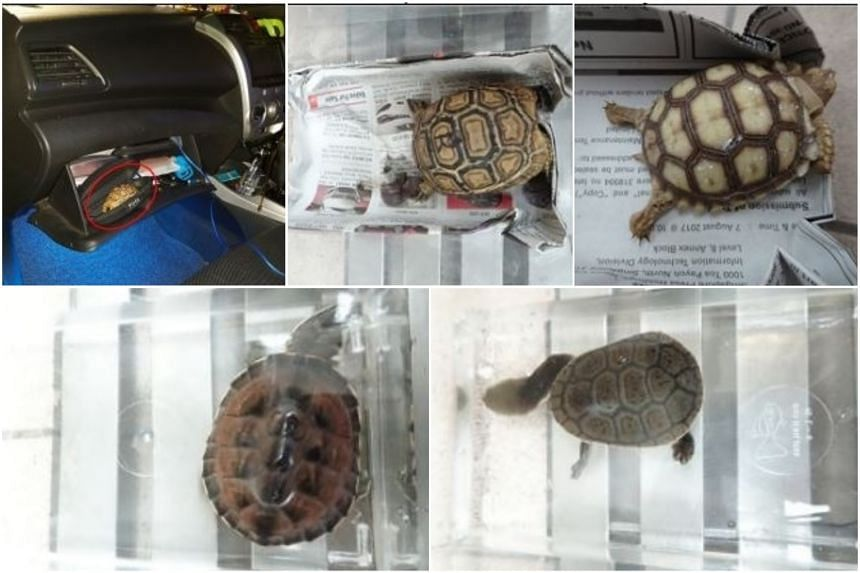 A man was fined $7,600 for the illegal import and possession of two tortoises and three turtles.