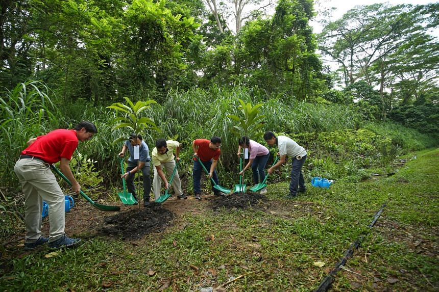 Some 200 volunteers planted many more trees and helped to restore a stream.