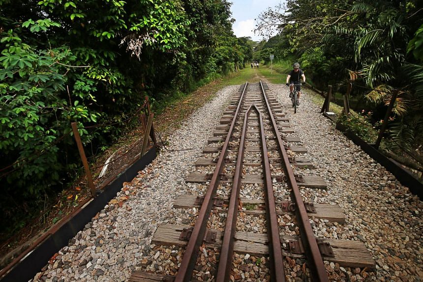 By 2021, the railway corridor will be cleared of alien trees and be filled with native plants instead.