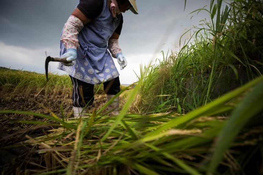 As the older generation of rice farmers and consumers dies out, some fear the industry will be unable to hold its own in a competitive global market.