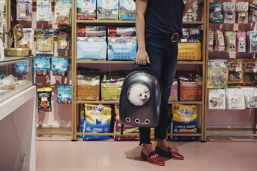 A pet owner with a dog in a backpack browsing shelves of imported pet food in a shop in Shanghai on Sept 15. American pet food brands have become collateral damage in a trade war that encompasses hundreds of billions of dollars in goods that flow bet