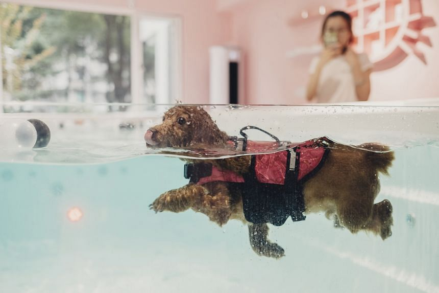 A dog swimming in a Shanghai pet store on Sept 15. Soaring costs have made it expensive for city dwellers to start families, so many buy animals instead.