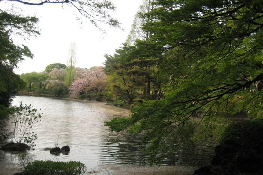 An elderly employee at Tokyo's Shinjuku Gyoen (pictured) cost the garden more than 25 million yen in revenue after allowing foreign visitors in for free for 2½ years as he was afraid of speaking to them.