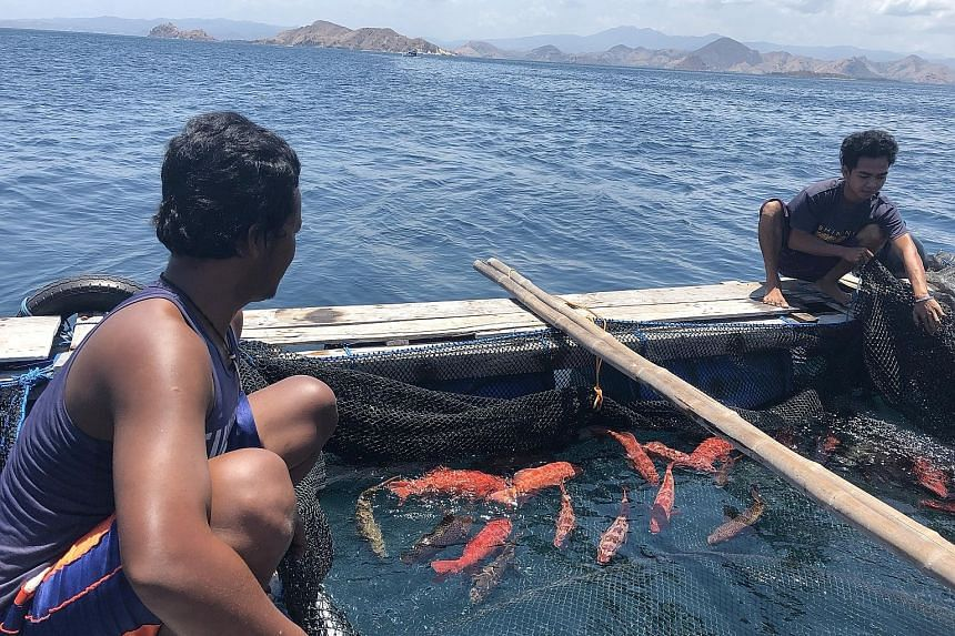 Workers at the Pulau Mas fish cages near Labuan Bajo, Flores, in eastern Indonesia. Decades of overfishing using cyanide and dynamite have decimated habitats of reef fish. The lesser-known live reef fish industry has not seen the broad recovery in In