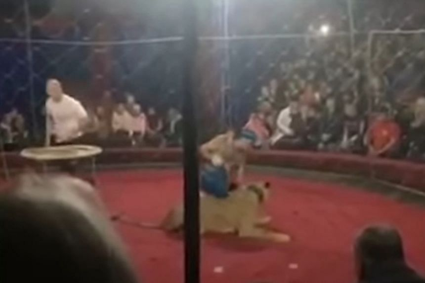 Amateur footage broadcast on television showed the animal, held on a lead by a lion tamer, before it pounced on a girl.