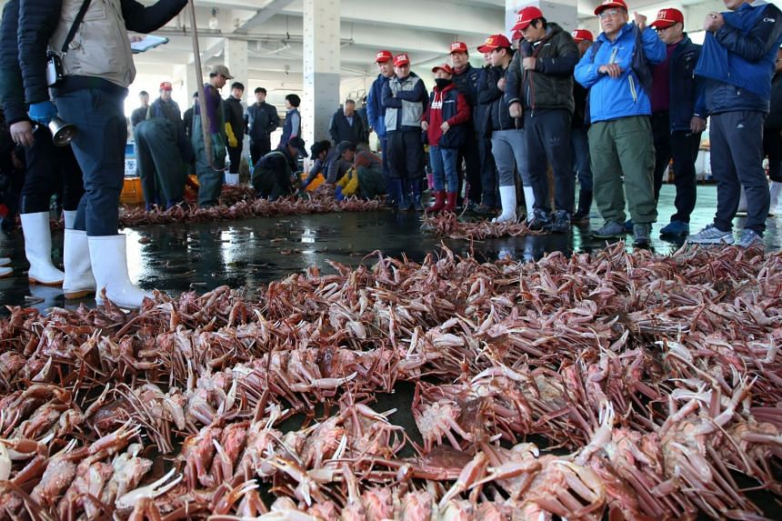 A snow crab auction is held at a fisheries market in Pohang, South Korea, on Nov 2, 2018.