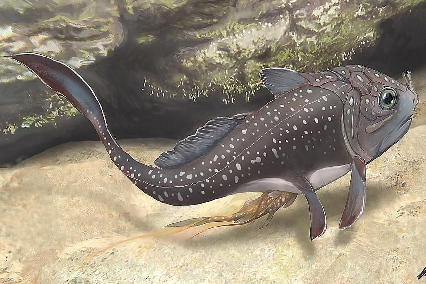 The birth of a materpiscis – a prehistoric fish. Placoderms are an extinct group of armoured fish that were the dominant vertebrates on Earth for over 70 million years.