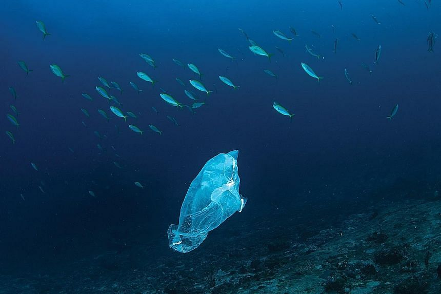 Plastic drifting in the ocean is a potential hazard to marine life. How much plastic the oceans can absorb is a question experts do not have an answer to.