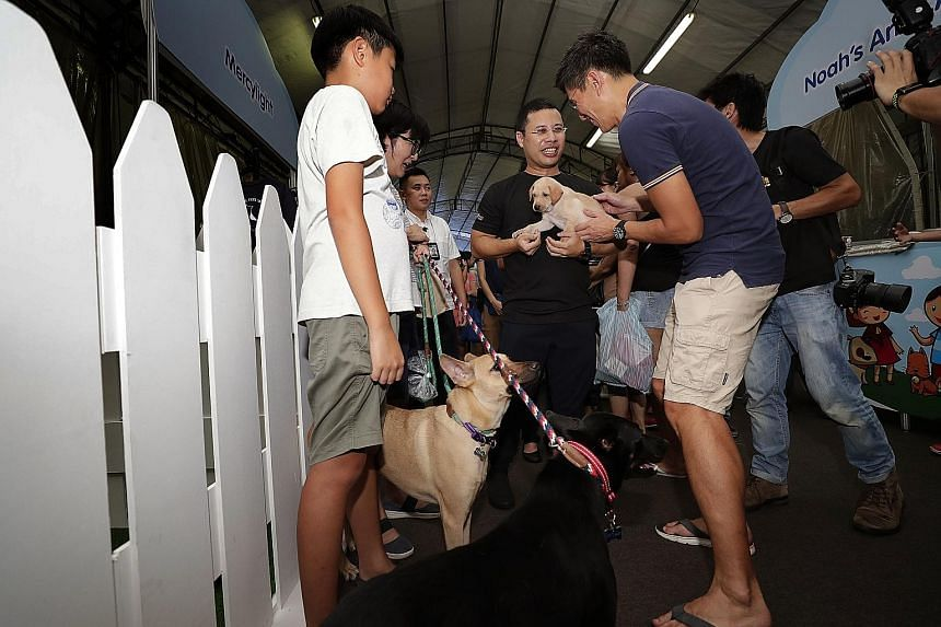 Mr Desmond Lee, Minister for Social and Family Development, holding a puppy available for adoption as he mingles with pet owners during his tour of the Happy Pets, Happy 'Hood carnival at Bukit Panjang yesterday.