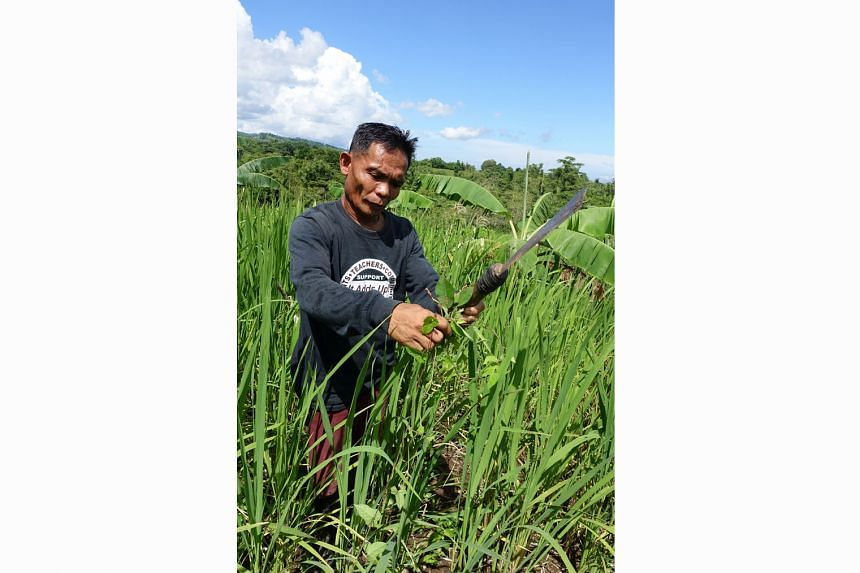 Climate change has forced Mr Bernardo Pelayo to relook his rice-growing practices, which include introducing varieties that are resilient in both heavy rain and drought.