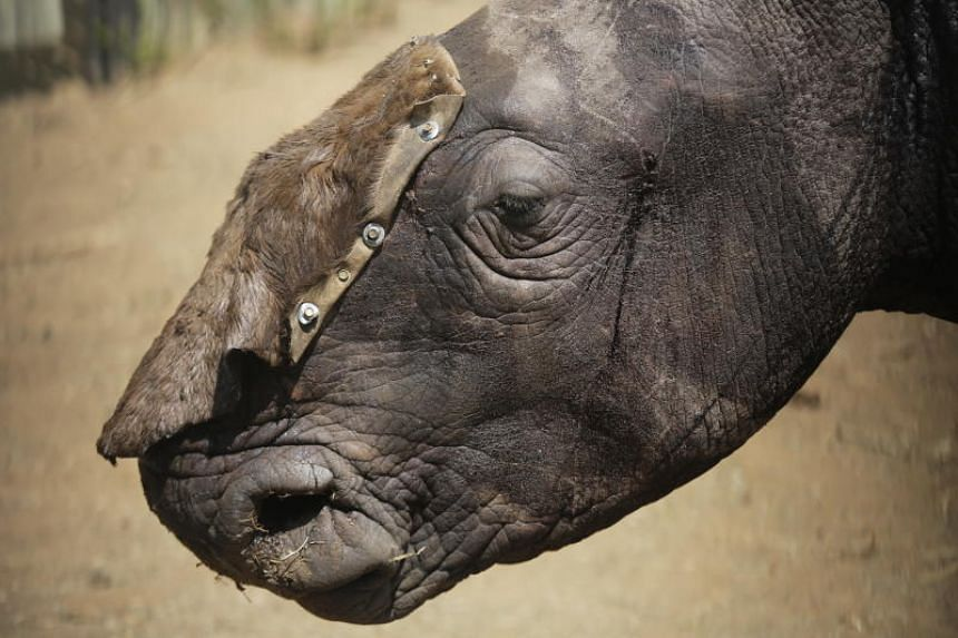Campaigners welcome China U-turn over rhino and tiger products