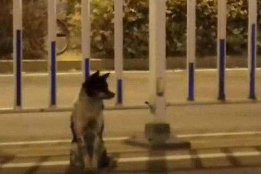 Dog in Inner Mongolia waits more than 80 days for its dead owner to