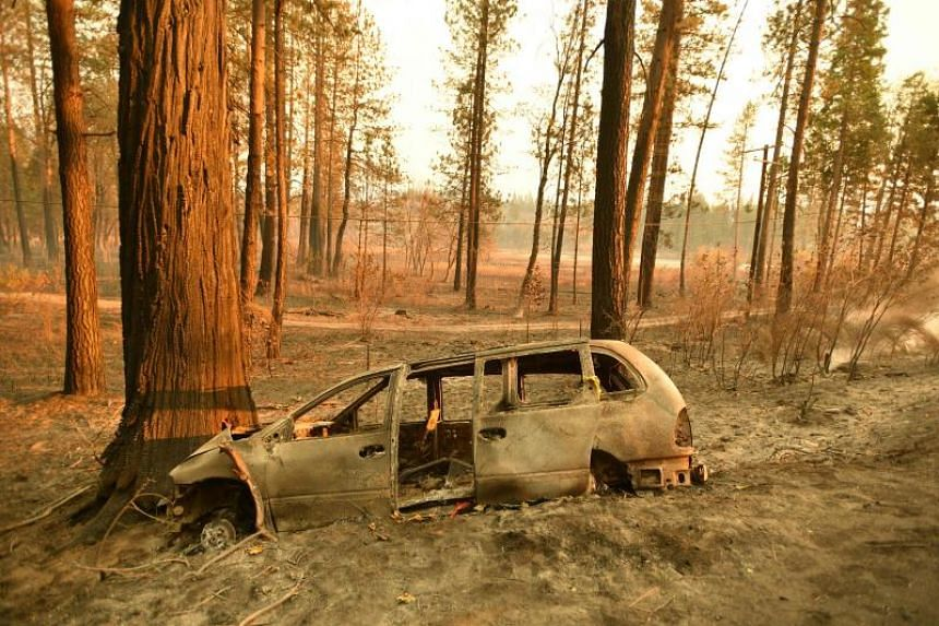 A burnt vehicle where human remains were found earlier, rests against a tree in Concow, California, on Nov 11, 2018 after the Camp fire ripped through the area.